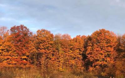 Northern Michigan Fall Activities