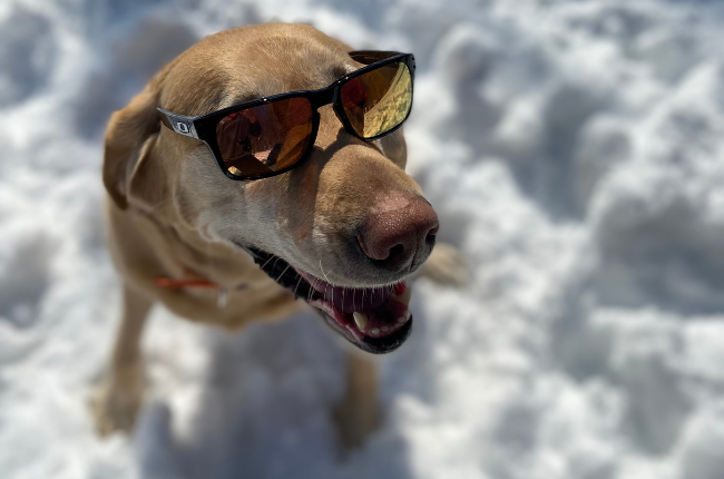 You may not see as many people wearing sunglasses in the winter as you do in the summer, but sunglasses protect your eyes year-round. Don't forget, the sun reflects off the snow and ice too.